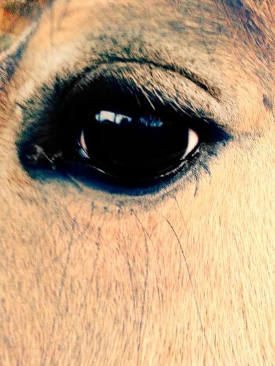 Augen Pony Pferde Augenblick