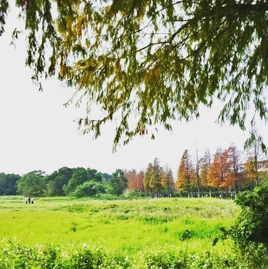 Tree Soccer Field Branch Field Rural Scene Agriculture Sky Grass Landscape Green Color