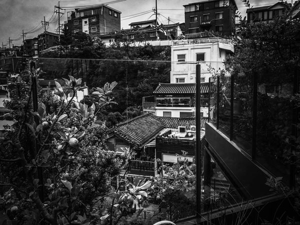 Korea Old Buildings Traditional Building Exterior Architecture History Historical Building Street Roof Rooftop Built Structure Tree City Town TOWNSCAPE Day Blackandwhite EyeEmNewHere EyeEm Gallery EyeEm