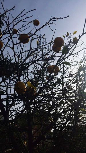 Mersin Lemon Lemontree First Eyeem Photo Spring Natural Garden Photography Garden