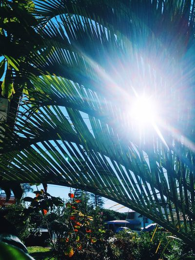 Palm Tree Tree Plant Growth Beauty In Nature Sky Low Angle View Sunlight Bright Tranquility Palm Tree No People Sunbeam Sun Nature Lens Flare Day Scenics - Nature Outdoors Leaf Sunny