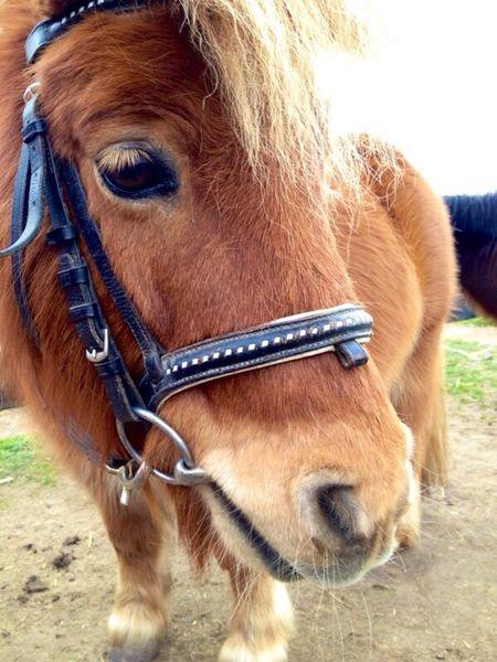 Das ist Leo mein Pony er ist ein sehr gutes Foto Model ❤️✨ Animals Pets Horses Pony
