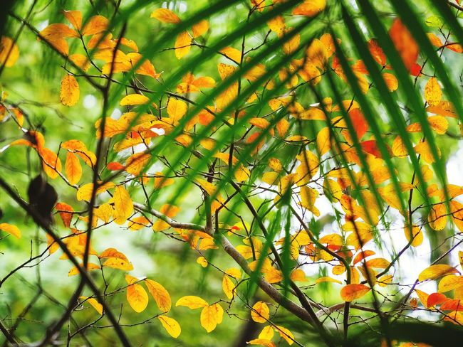 Nature Growth Beauty In Nature Orange Color No People Multi Colored Close-up Backgrounds EyeEm Best Shots My Unique Style Getting Inspired EyeEm Gallery Exceptional Photography Artistic Expression EyeEm Nature Lover Beauty In Nature Wilderness Detail Branch Sunlight Full Frame
