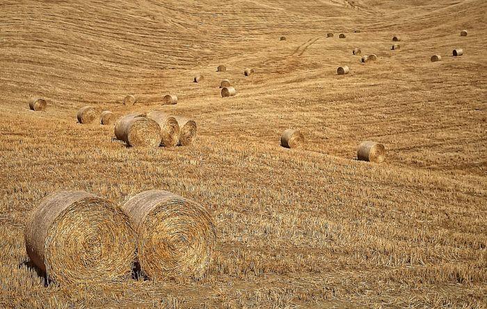 Estate Field Siciliabedda Pittura Campagna Fieno Rotoli Giallo Oro Fotografia