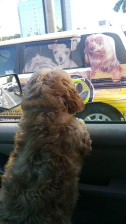 Dogs barking driving looking Dog One Animal Car Pets Transportation New To EyeEm No People