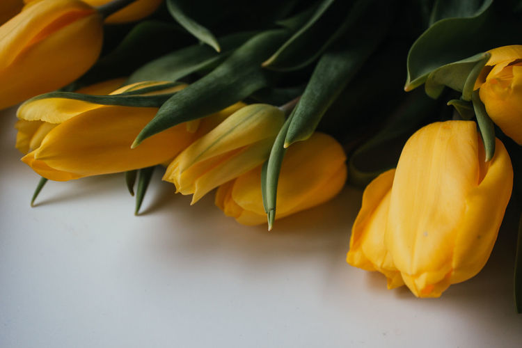 Close-up of yellow roses on plant