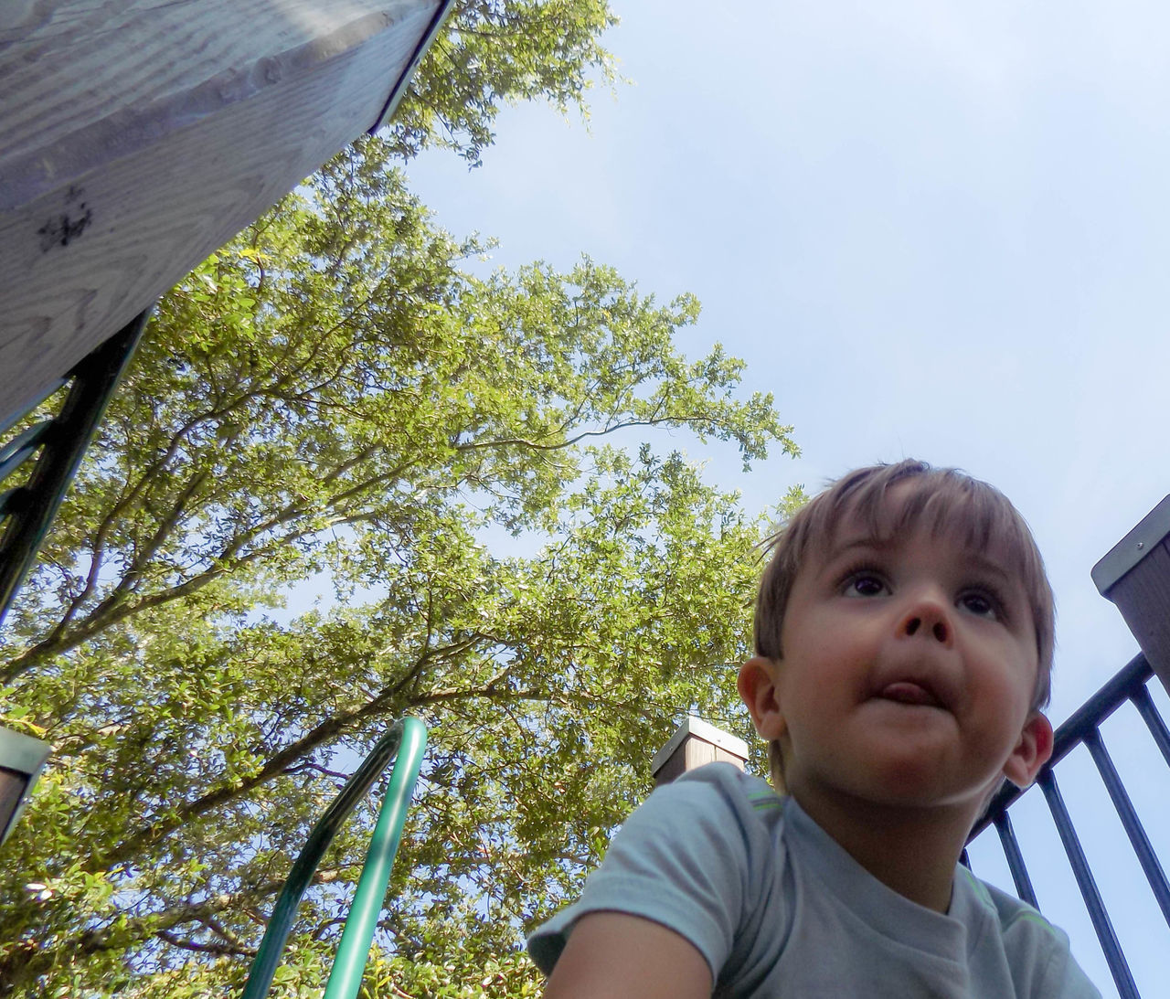 childhood, low angle view, tree, one person, child, looking at camera, boys, growth, portrait, real people, day, outdoors, people