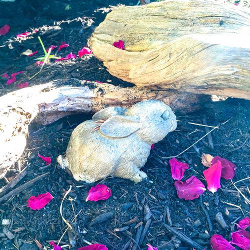 Cement Rabbit Close-up Garden Art Garden Statue Ground Kitch Outdoors Petals Rabbit