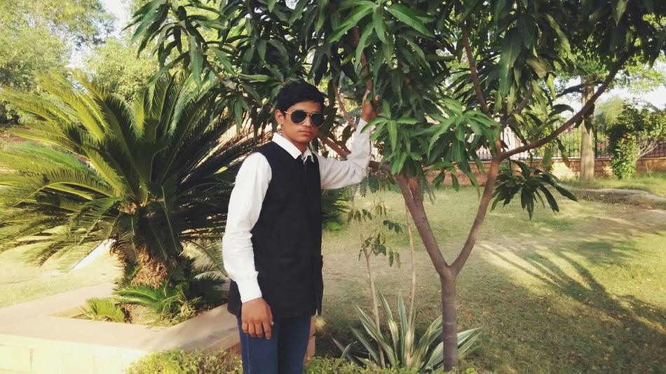 Palm Tree Tree One Man Only One Young Man Only Day Nature Model Chetan Choudhary Jodhpur