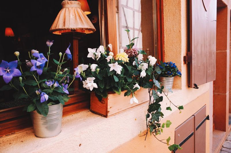 Flower Plant Nature No People Day Architecture Fragility Outdoors Beauty In Nature Flower Head Window Summer Lifestyles Relaxing Culture Tradition Street Afternoon