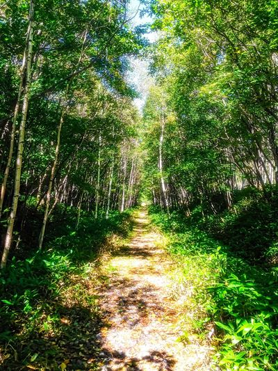 Tree Forest The Way Forward Nature Tranquil Scene Tranquility Growth Beauty In Nature Scenics Day No People Outdoors Landscape Walkway Grass Branch Straight Path Kamishihoro Hokkaido Japan Memories Sweet Memories Travel Travel Photography IPhone