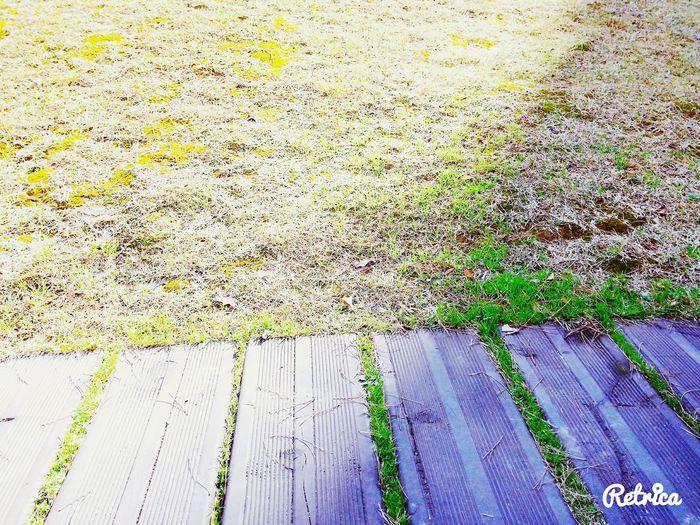 똑같다.다르다. First Eyeem Photo 풀잔디나무새싹녹색여름