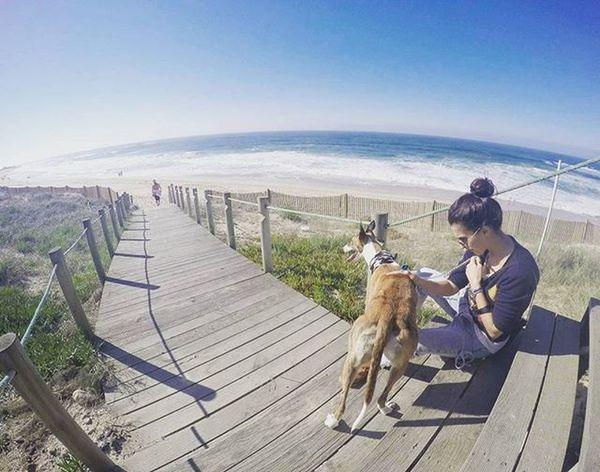 TBT  Throwbackthursday  Greyhound Greyhounds Greyhoundsofinstagram Beach Dog Dogs Dogsofinstagram Gopro session by @pedro_jb_rocha