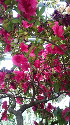 Nature Beauty In Nature Flowers Garden Bloom Spring
