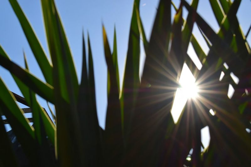 Growth Nature Leaf Green Color Sun Outdoors No People Plant Palm Tree Sunlight Day Low Angle View Tree Beauty In Nature Close-up Sky Freshness Reflection Colors Peace Energy Earth Green Greenleaf Background