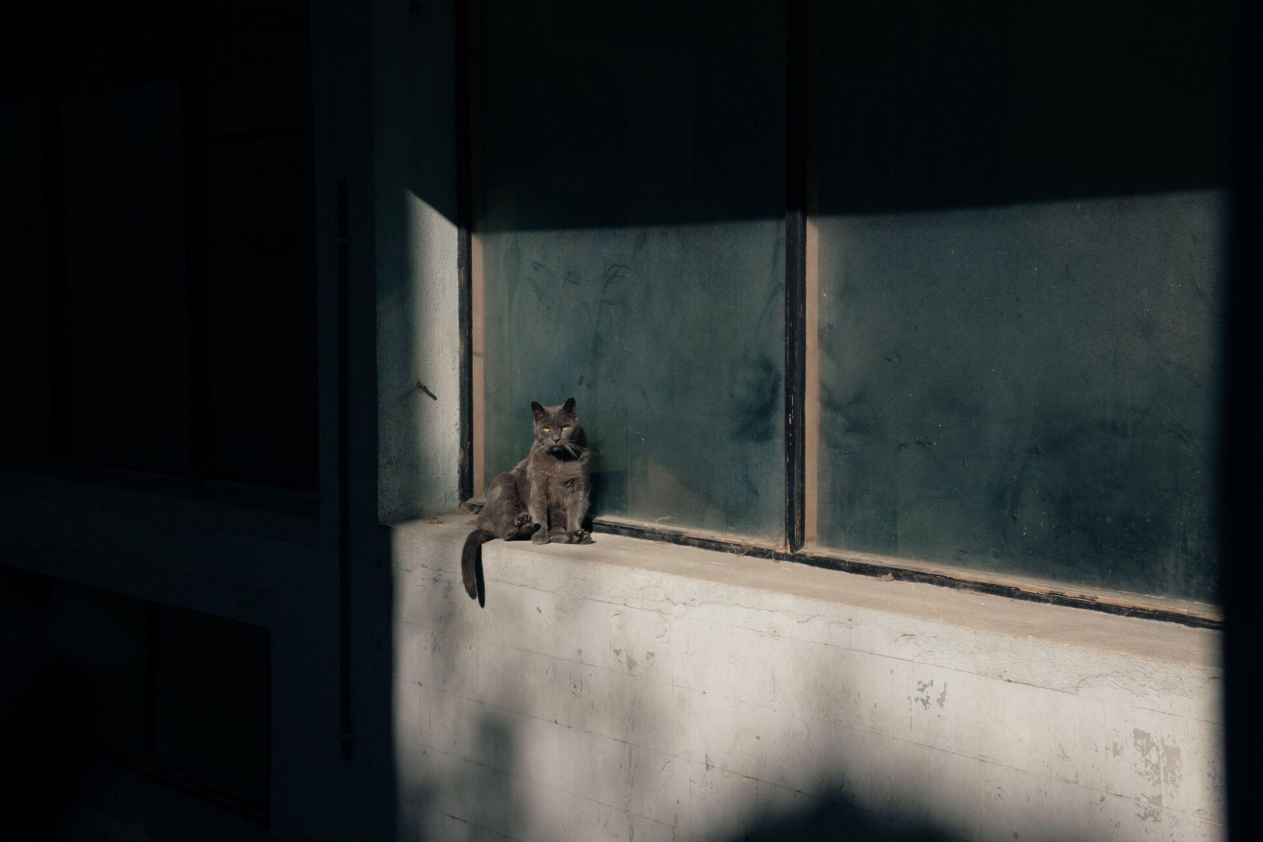 one animal, animal themes, window, indoors, no people, mammal, day