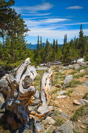 Tree No People Day Nature Outdoors USA Colorado Wood Mountain Range Landscape Landscape_photography Nature Lover Been There.