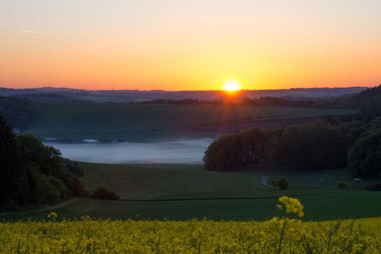 Spring sunrise Eifel Germany Nature Rapeseed Field Tranquility Beauty In Nature Eifel Landscape Misty Morning Rapeseed Spring Spring Morning Sunrise Sunset Tranquil Scene Winkel