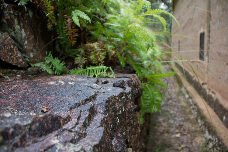 Alley Focus On Foreground Old Buildings Outdoors Plant Plant Part Rock