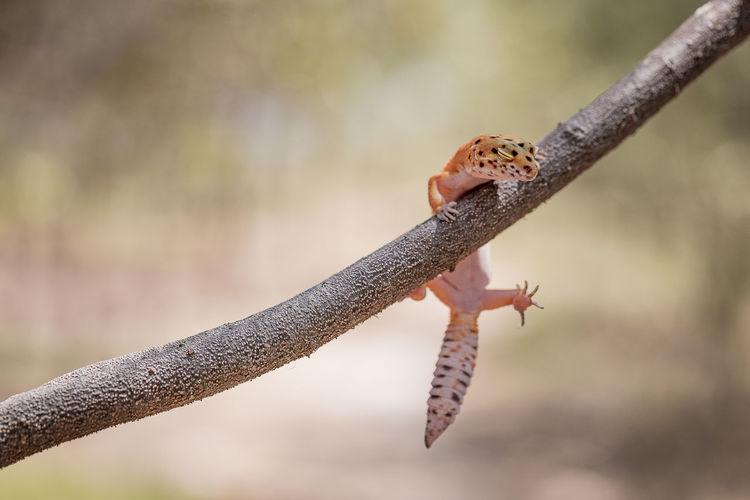 Lizard on branch