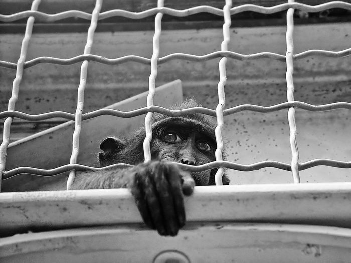 Low Angle View Of Monkey Seen Through Cage