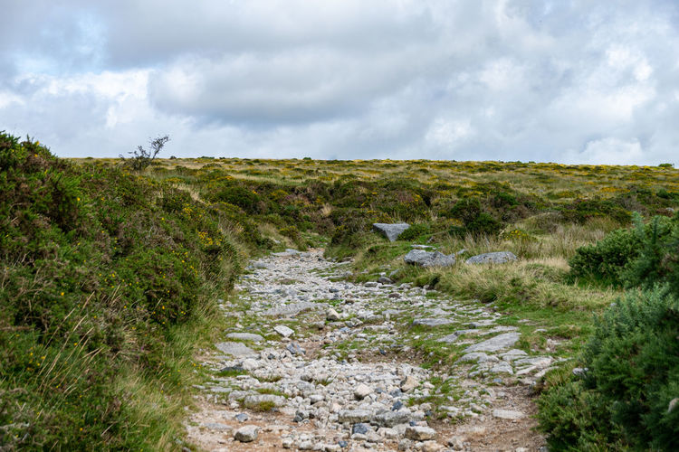 Landscape of dartmoor national park, near princetown, sheepstor, devon, uk