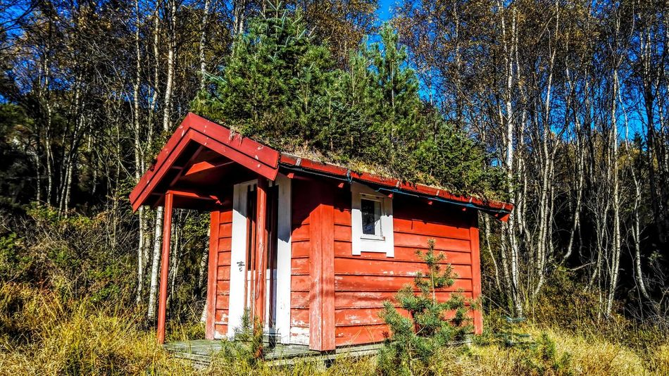 Santa Claus cabin, Hyllestad Norway Architecture Beauty In Nature Built Structure Cabin Day Forest Green Color Growth House Multi Colored Nature No People Non-urban Scene Outdoors Red Santa Claus Tree WoodLand