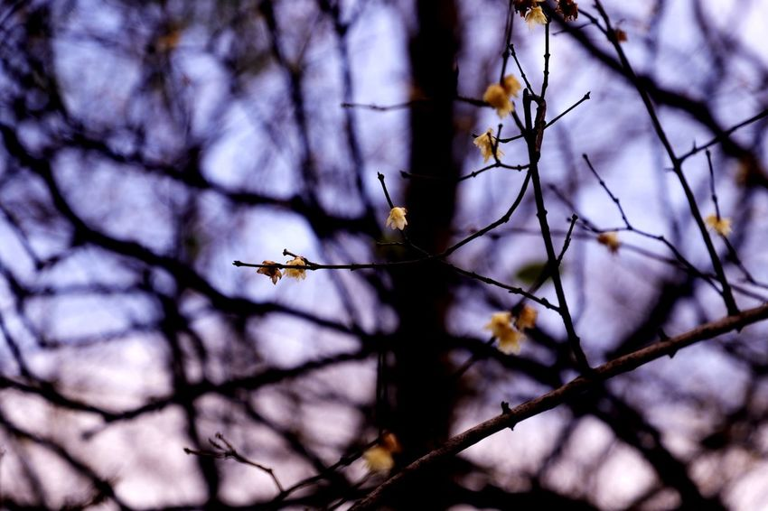 Branch Tree Flower Nature Beauty In Nature No People Springtime