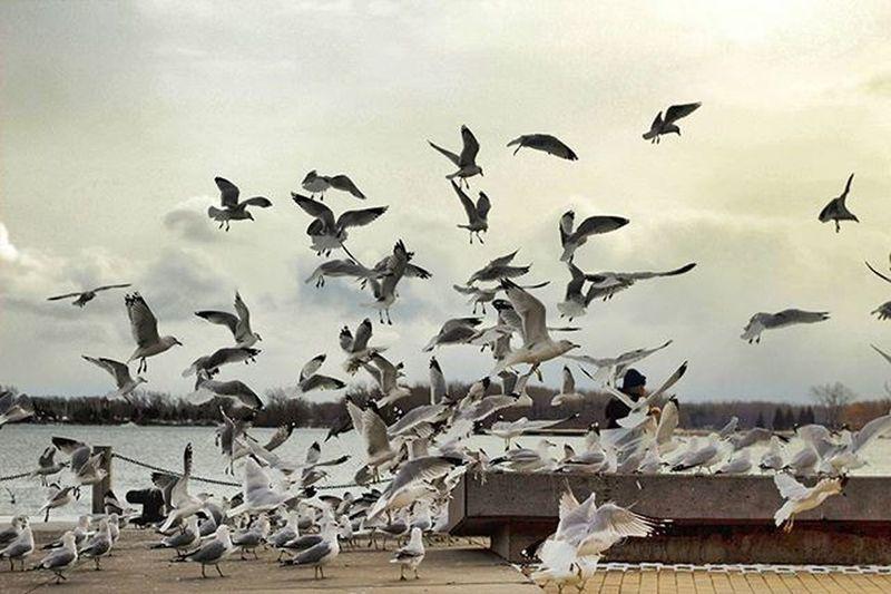 Flock of birds flying over white background