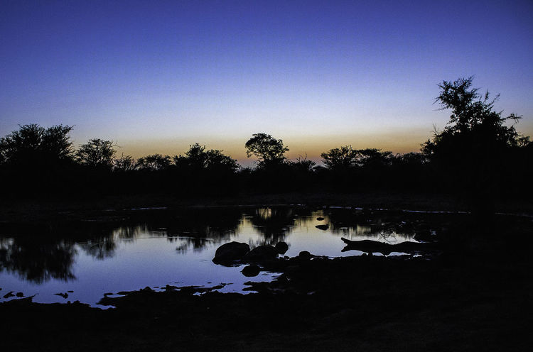Game Drive Beauty In Nature Blue Clear Sky Idyllic Nature No People Non-urban Scene Plant Reflection Scenics - Nature Silhouette Sky Sunset Tranquil Scene Tranquility Tree Water Watering Hole The Great Outdoors - 2018 EyeEm Awards HUAWEI Photo Award: After Dark