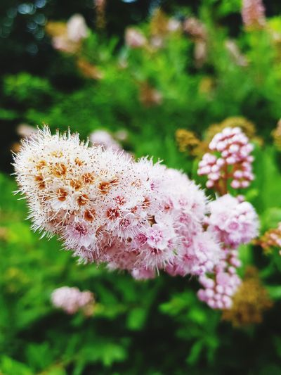 Nature_perfection Nature Nature Photography Naturelover Day Naturelovers Beauty In Nature Flower Pink Flower 🌸