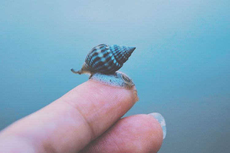 Detail shot of finger holding snail