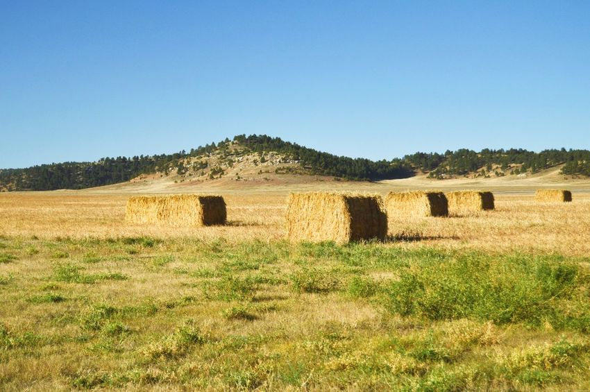 End of the field Many Of A Kind Hillside Hay Outdoors Yellow Color Sunshine Shadow Rural Scene Clear Sky Agriculture Bale  Landscape Rolled Up Ranch