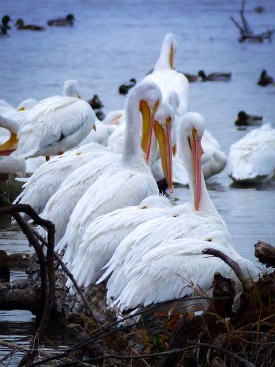 The Gathering EyeEm_crew White Rock Lake Tadaa Community