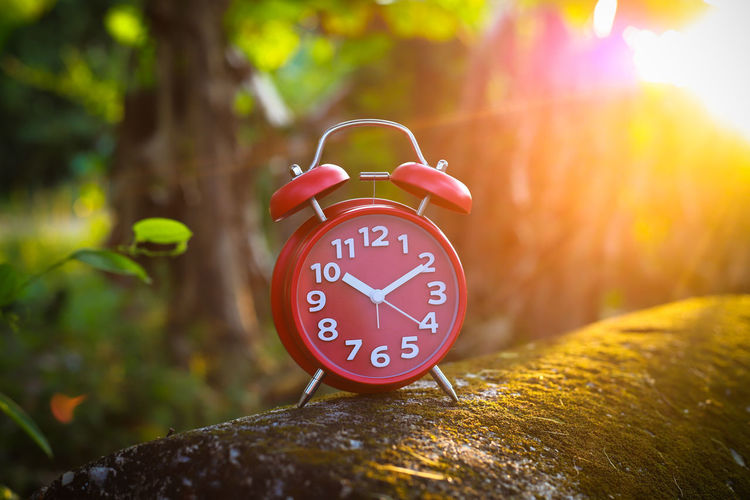 Red Alarm Clock Red Alarm Clock Clock Hand Clock Clockworks Alarm Clock Time No People Tree Focus On Foreground Number Nature Clock Face Plant Red Beginnings Minute Hand Communication Wood - Material Outdoors Accuracy Forest Hour Hand Close-up