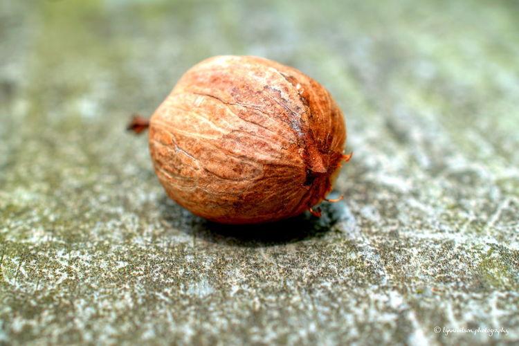 Hickory Hickory Nut Macro