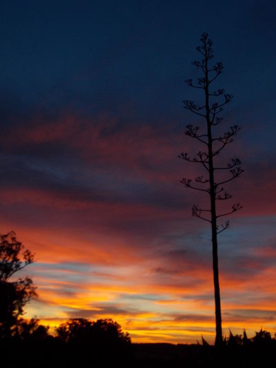 Natural Beauty Nature_collection Plants Red Sky At Night Sunset Sunset Silhouettes