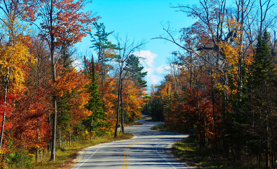 Autumn Autumn Colors Autumn Leaves Beauty In Nature Changing Colors Changing Seasons Colorful Curvy Fall Beauty Fall Colors Fall Leaves Forest Growth Landscape Nature No People Outdoors Scenics Seasons The Way Forward Tree Winding Road