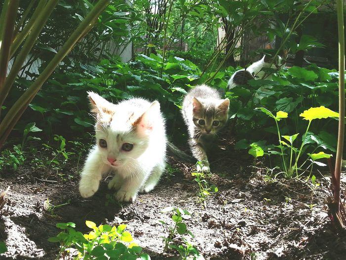 Pets Corner Kitten Cute Nature Exploring New Ground Cats
