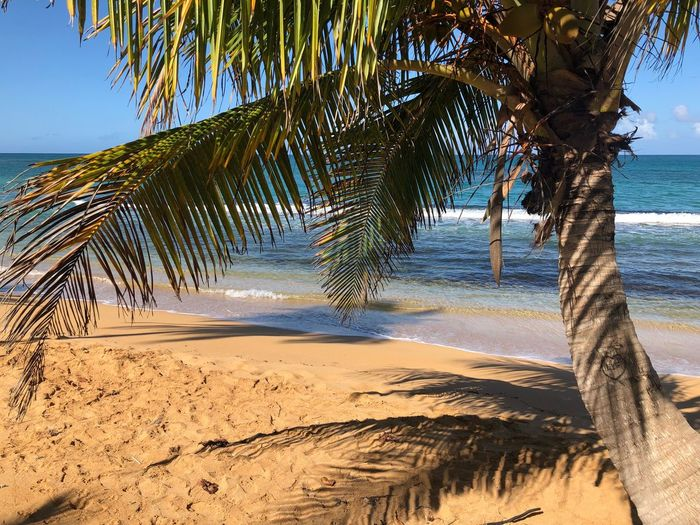 Life EyeEm Selects Tree Sand Beach Land Plant Sky Water Sea Tranquility Nature Beauty In Nature Tranquil Scene Scenics - Nature No People Palm Tree Day Tropical Climate Sunlight Non-urban Scene Outdoors