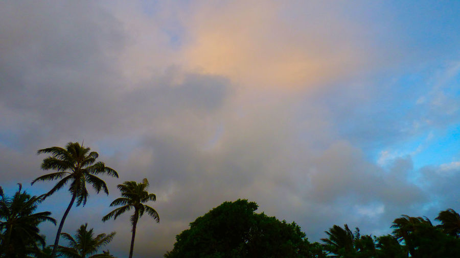Saturday Morning November 7th 2015 96734 From The Mountains To The Hanging Out Hawai'i Hawaii Kailua  Kalawa Ko'olaupo O'ahu Rabbett Robert Abbett Windward Oahu