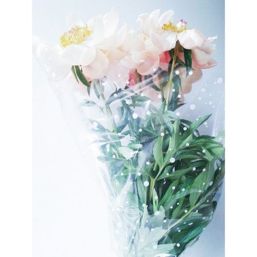 Пионы любовь Flowers Pure Vscom Vscedition vscmasters vscomonly vscgram bestvsco