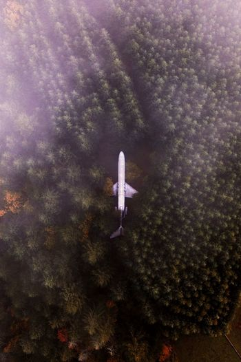 Airplane home outside of Portland, OR. IG @noeldxng Fog Dji Plane Fall Fall Beauty Aerial View Drone  Forest Orange Oregon Home Abandoned Vista View View From Above America PNW Portland Trees Galaxy Worn Out Obsolete Woods WoodLand Aircraft Wing Aeroplane 17.62°