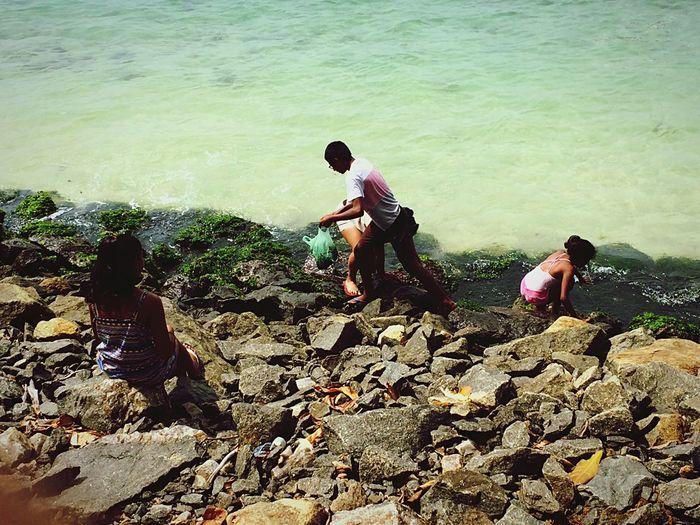 Children collecting sea weeds