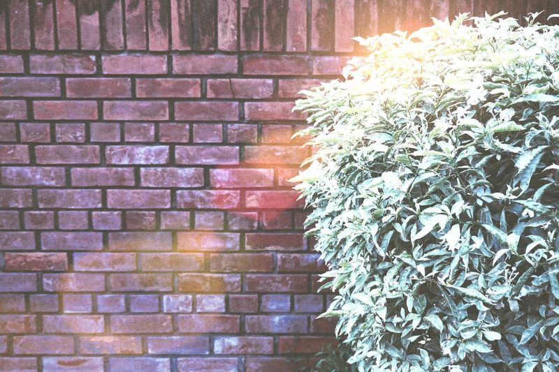 Wall and sunlight Park Brick Wall Wall Wallpaper Light Sunlight Tree Green Red Cilor Art Sunset Sunshine Flower Close-up Plant