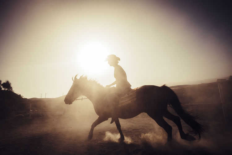 rider riding horse making dust. run and wildlife concept outdoor leisure adventure. traveling and discovering new great places Cowboy Animal Animal Themes Animal Wildlife Cowboy Hat Domestic Domestic Animals Dust Full Length Herbivorous Horse Horseback Riding Lens Flare Livestock Mammal Motion Nature One Animal One Person Pets Real People Riding Side View Sky Sunlight