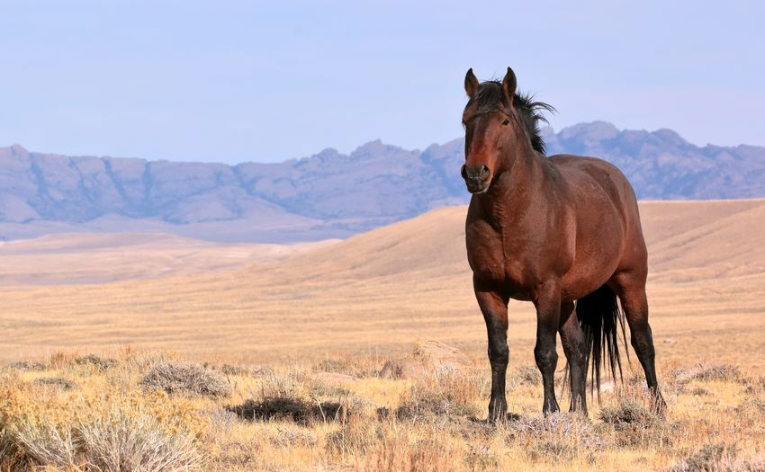 Horse Standing In A Landscape