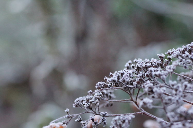Froozen garden Humanity Meets Technology Plant Cold Temperature Winter Tree Focus On Foreground Beauty In Nature Nature Close-up Snow Growth Day No People Tranquility Frozen Fragility Branch White Color Vulnerability  Flower Outdoors Lichen