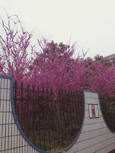 po li ti c s Contest on the way home😊 Spring Taking Photos Flowers Rainny 清明