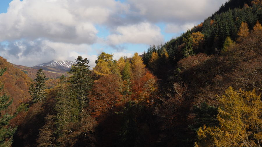 Panoramic view of trees in forest against sky during autumn